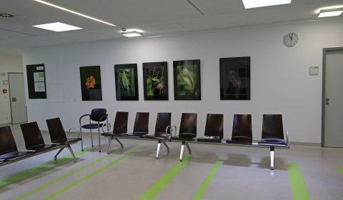 Egon Woblick: Ausstellung 14 Nothelfer Weingarten
